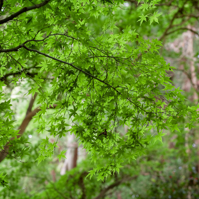 """""""Tropical Forest"""" stock image"""