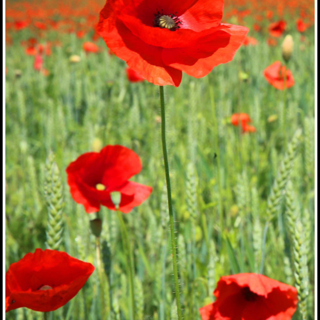 """Lest We Forget"" stock image"
