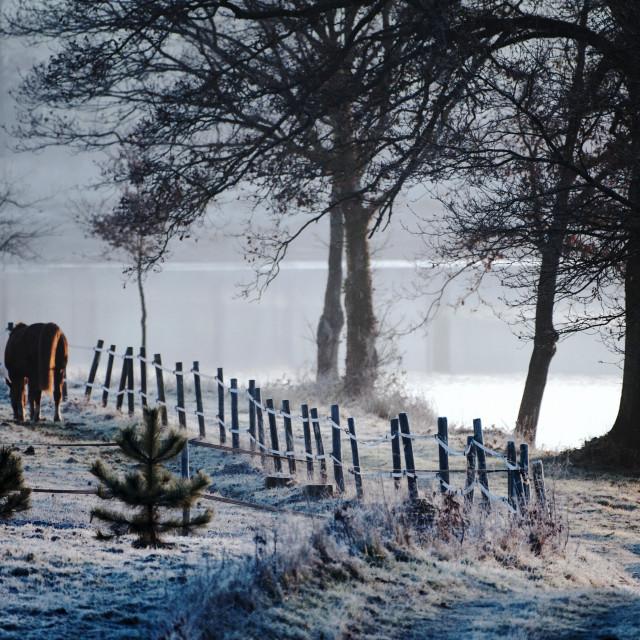 """""""Peaceful winter scene"""" stock image"""