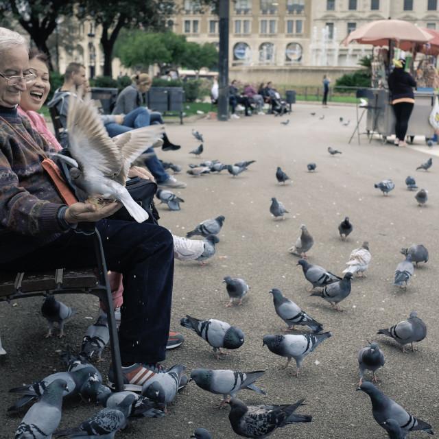 """Man Feeding Birds"" stock image"