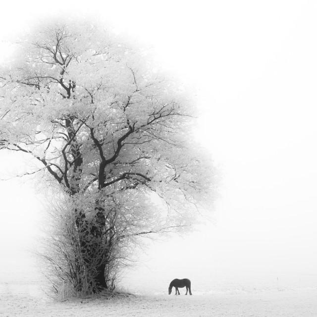 """""""Winter Wonder Land"""" stock image"""
