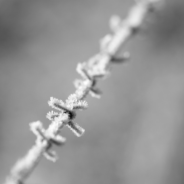 """Frozen barbed wire"" stock image"