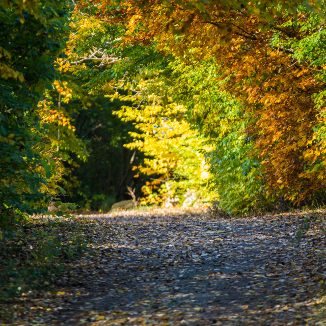 """Tunnel of autumn leaves"" stock image"