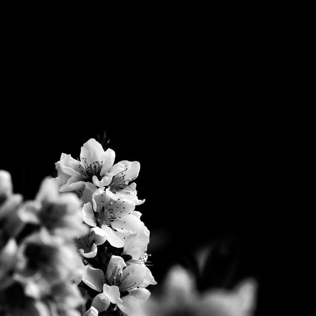 """So white flowers"" stock image"