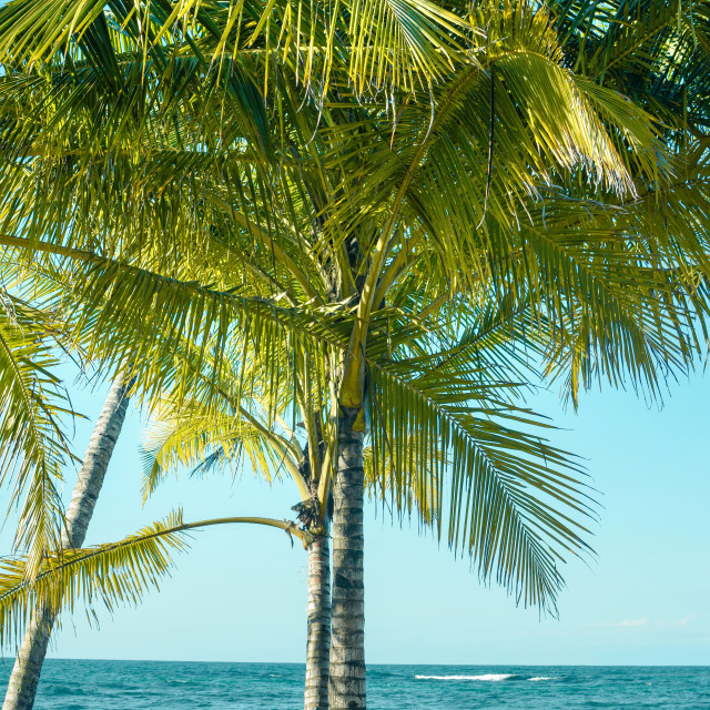 """""""bicycle leaning on a palm tree"""" stock image"""