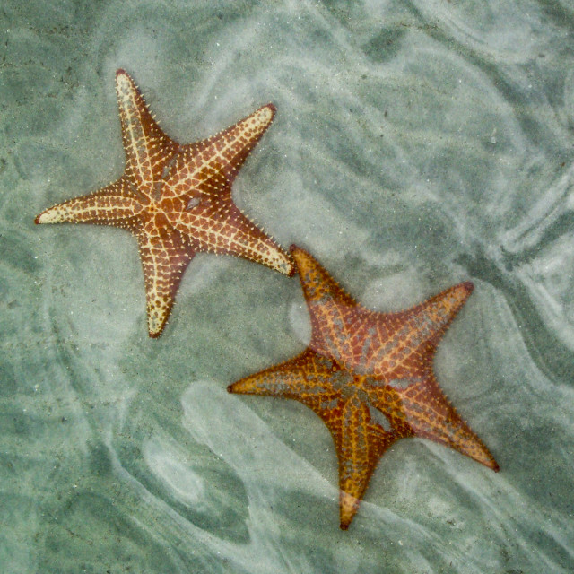 """Starfish Beach"" stock image"