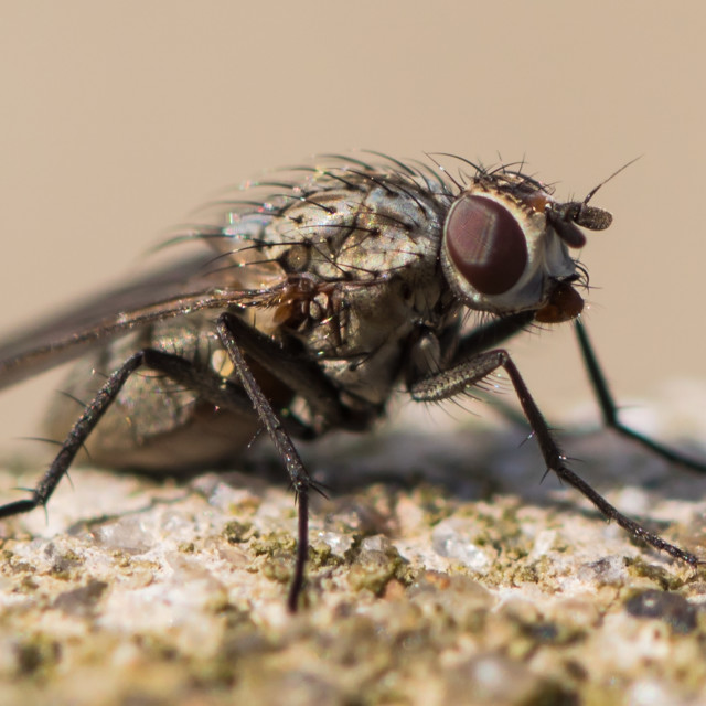 """Isolated fly"" stock image"