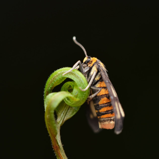 """Tiger Moth"" stock image"