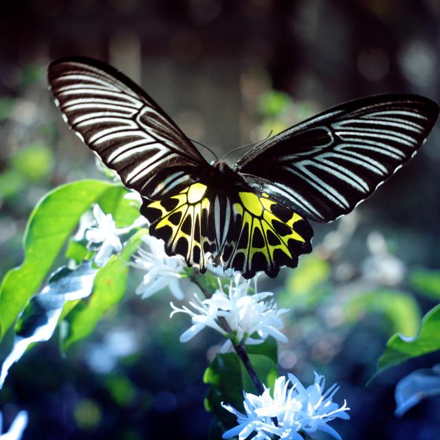"""Butterfly & Coffee Flower"" stock image"