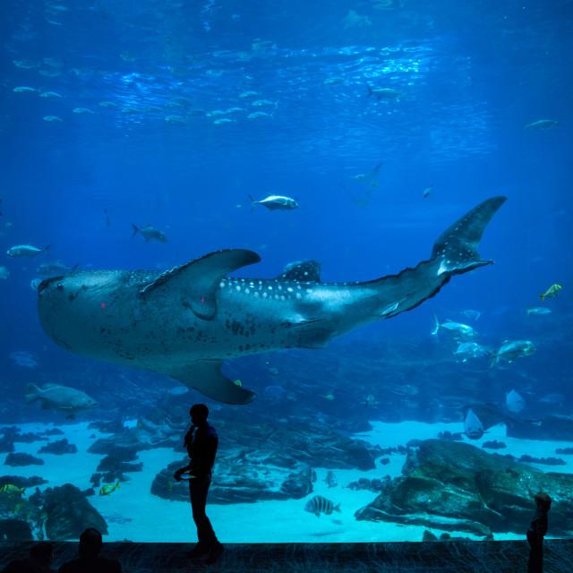 """""""Fishes in aquarium"""" stock image"""