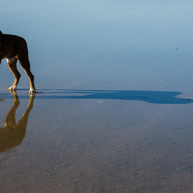 """Dog, reflection and shadow"" stock image"