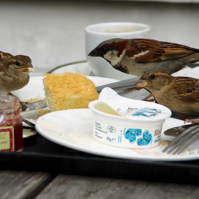 """Lunch - for the birds"" stock image"