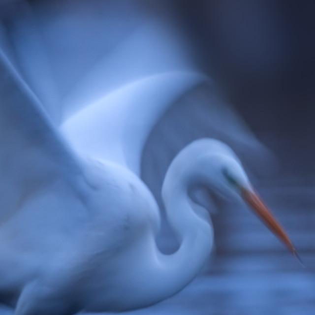 """Dawn with heron"" stock image"