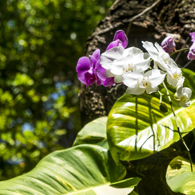 """Detail of an orchid in a public garden"" stock image"