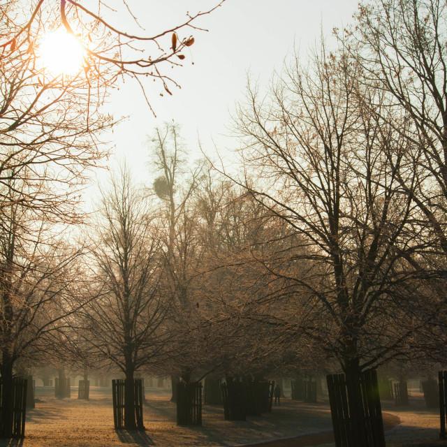 """""""Bushy park - Kingston on Thames"""" stock image"""