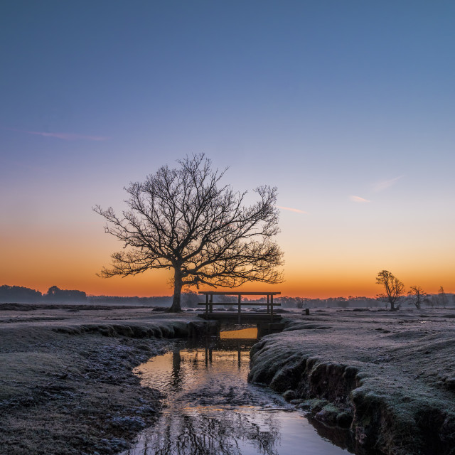"""Winter Dawn at Longwater Lawn, New Forest National Park"" stock image"
