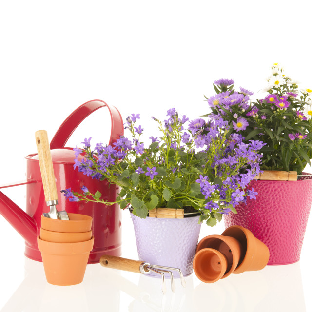 """""""Campanula and daisies in flower pot"""" stock image"""