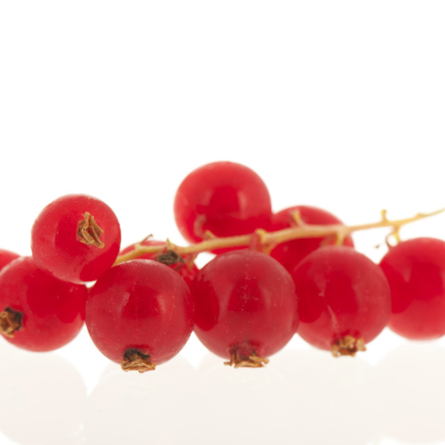 """""""Red currants isolated on white"""" stock image"""