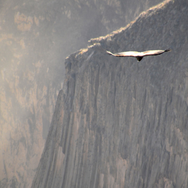 """Flight of the Condor"" stock image"