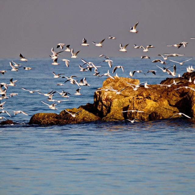 """Seagulls"" stock image"