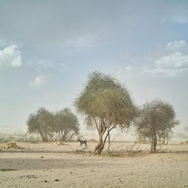 """Sandstorm"" stock image"