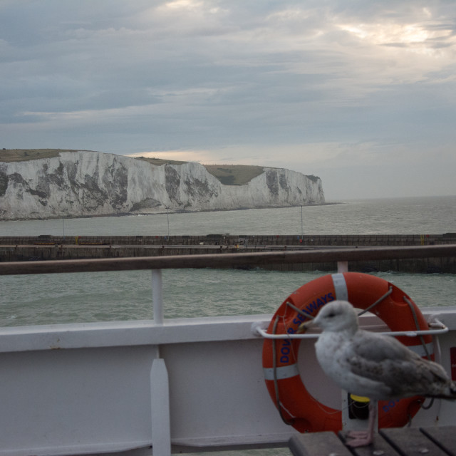 """""""White cliffs of Dover and the English Channel"""" stock image"""