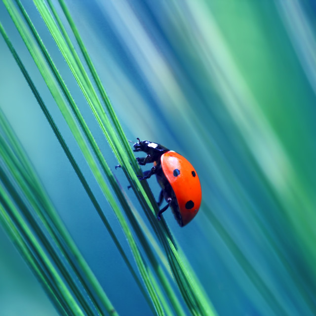 """Ladybug found in the grass"" stock image"