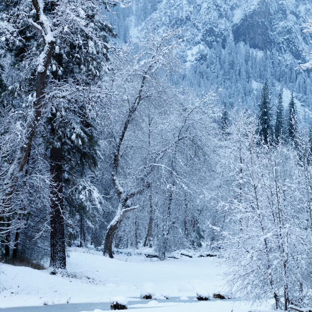 """Merced river blanketed with snow"" stock image"