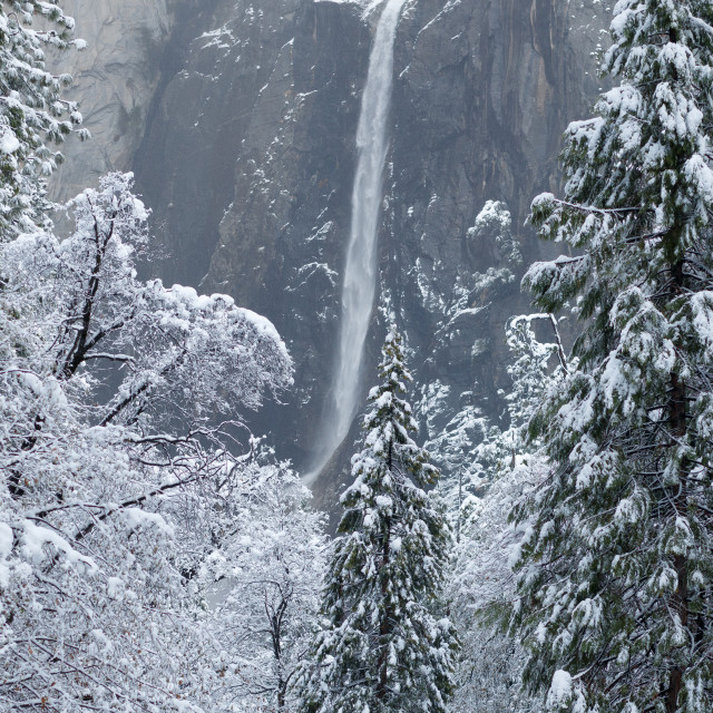 """Yosemite falls and trees blanketed with snow"" stock image"