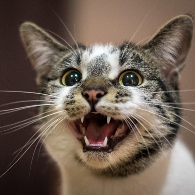 """Meow"" stock image"