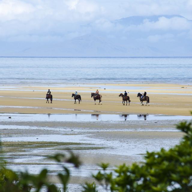 """""""Abel Horses"""" stock image"""