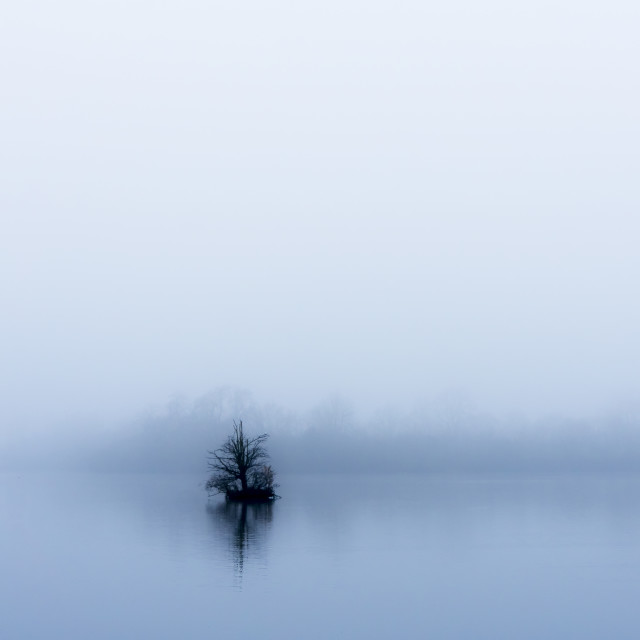 """Minimalist Tree in the fog."" stock image"