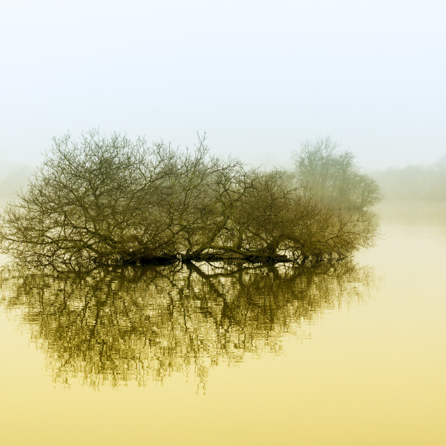 """Trees in the fog."" stock image"