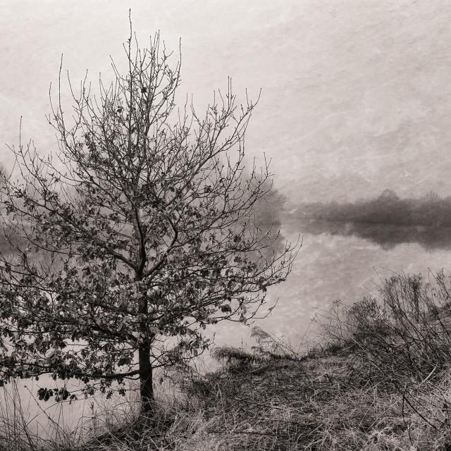 """Riverside tree in the fog."" stock image"