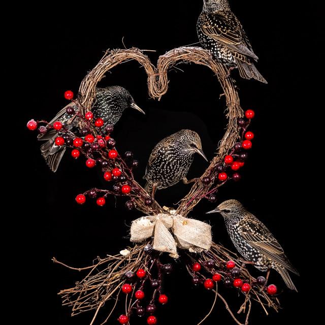 """Love Birds"" stock image"