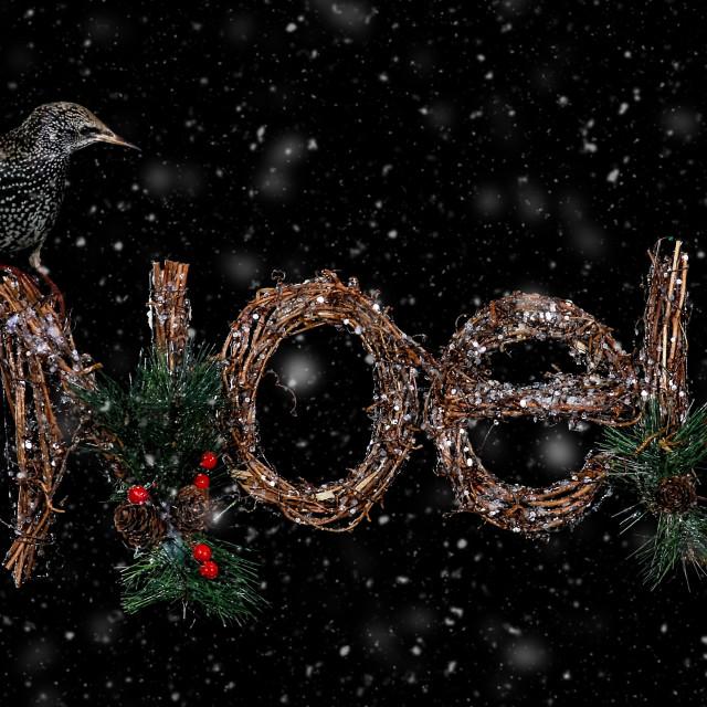 """Noel"" stock image"