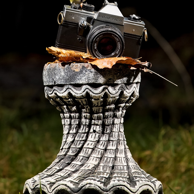 """Ready to Shoot"" stock image"