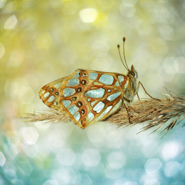 """""""Lonely butterfly on a contrasting background"""" stock image"""