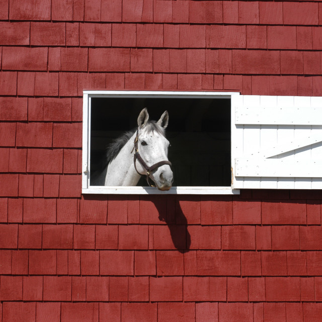 """""""white horse in red barn window"""" stock image"""