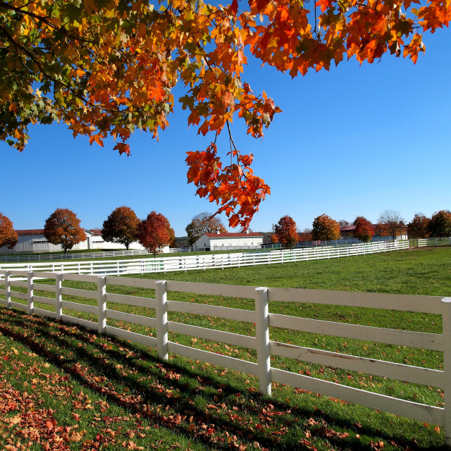 """Countryside autumn foliage"" stock image"