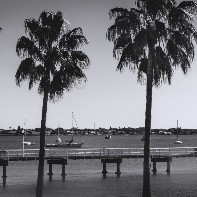 """""""Tall Palms and Long Pier"""" stock image"""
