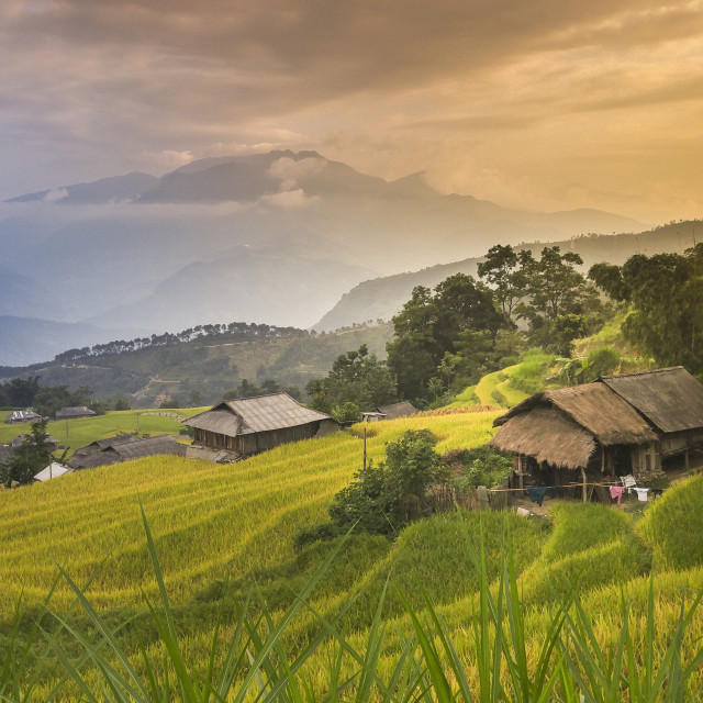 """House and terraced rice fields, Hoang Su Phi, Vietnam"" stock image"