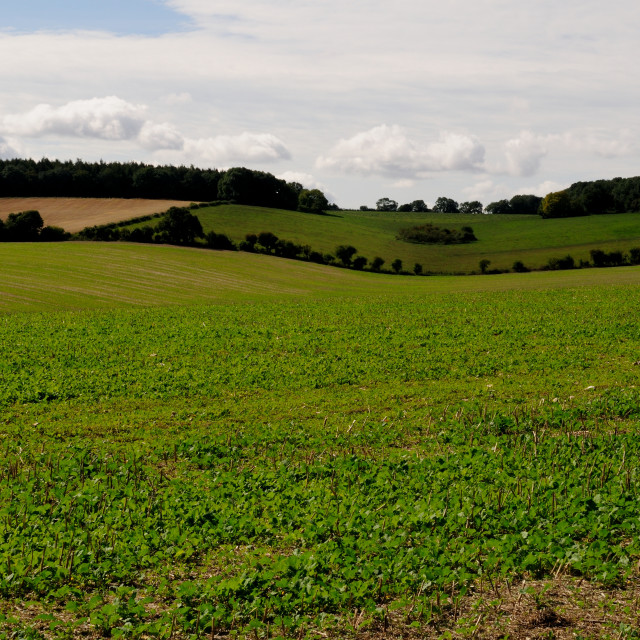 """""""England rolling hills"""" stock image"""