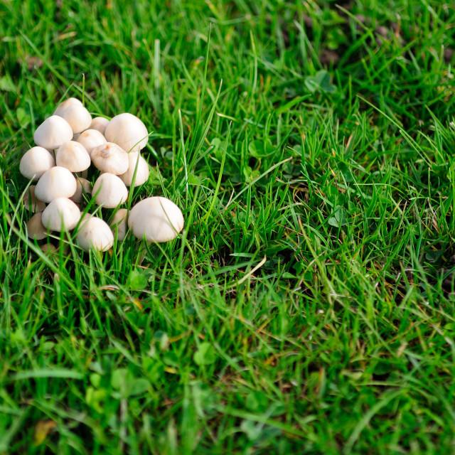 """""""Mushroom village"""" stock image"""
