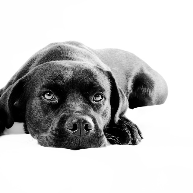 """High key dog portrait"" stock image"