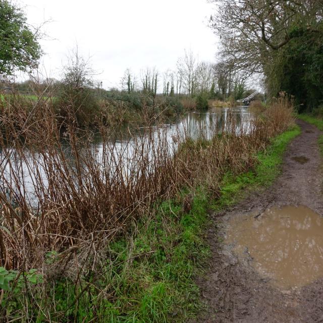 """Muddy puddle canal walk"" stock image"