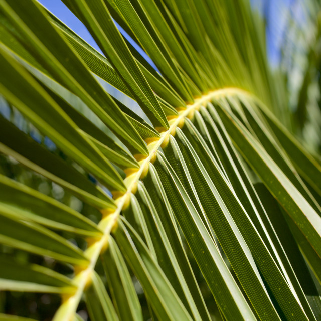 """Palm"" stock image"