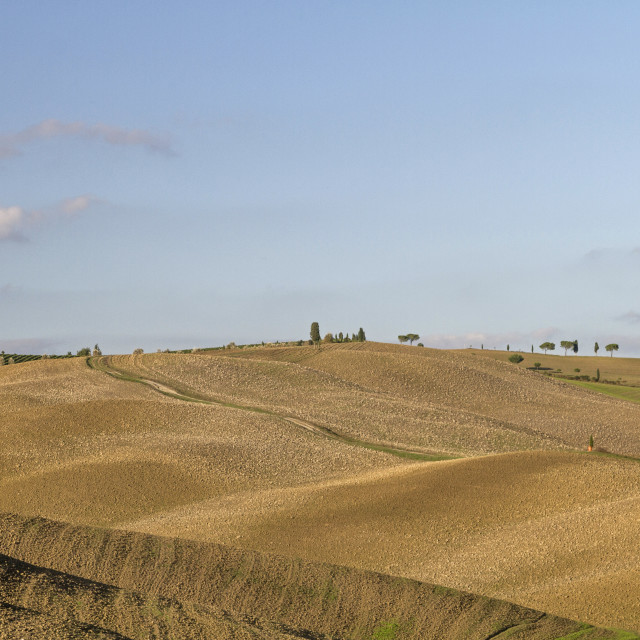 """Brown fields in Tuscany"" stock image"