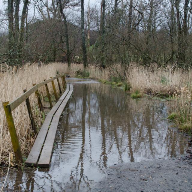 """""""Derwentwater footpath"""" stock image"""