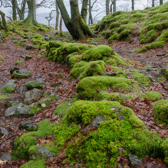 """Mossy footpath"" stock image"